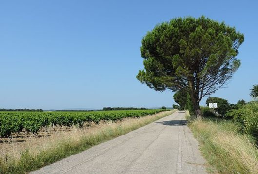640px-road_tree_provence